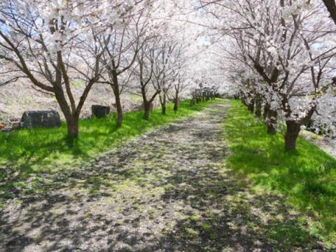 bridge-yawarakanaharukaze-img